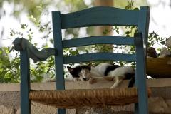Kriti Cat