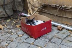 Istanbul Street Cat